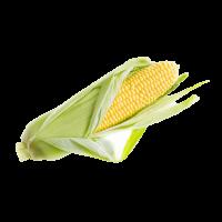 organicc-corn